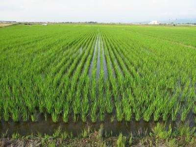 新潟もりばやし農園の特別栽培米は「土作り」からこだわっています。