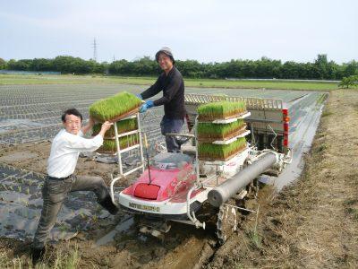 新潟もりばやし農園の有機栽培米は「土作り」からこだわっています。